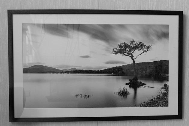 """Benoit De Clerck - Photo """"Arbre sur lac"""" (40/60)"""