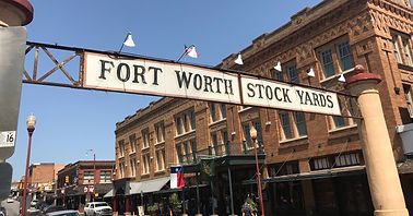 cattle-cattle-drive-ft-worth-1273035.jpg