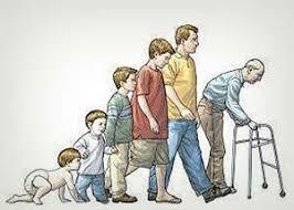 İnsan Yaşamı Boyunca Nasıl Gelişmektedir?