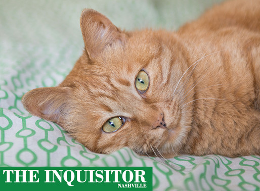 Insomniac cat only sleeping 15 hours a day