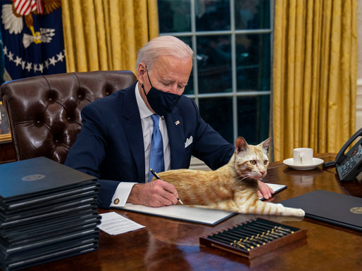 GOP hopeful White House cat will limit Biden's ability to sign executive orders