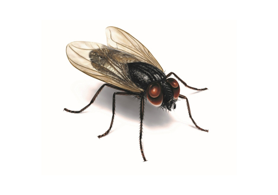 Fly's