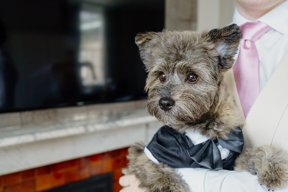 Dog wearing a tux ready for a wedding