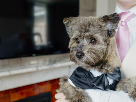 Dogs at weddings - how to have the 'pawfect' day