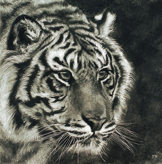 Eyes of the Tiger