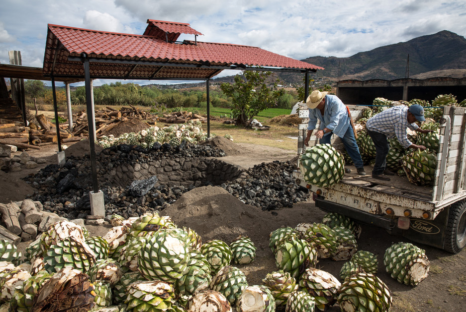 Workers unload hearts of agave, weighing as much as 300 pounds, to be baked in an in-ground horno at Bruxo Mezcal, outside San Dionisio Ocotepec, Oaxaca.