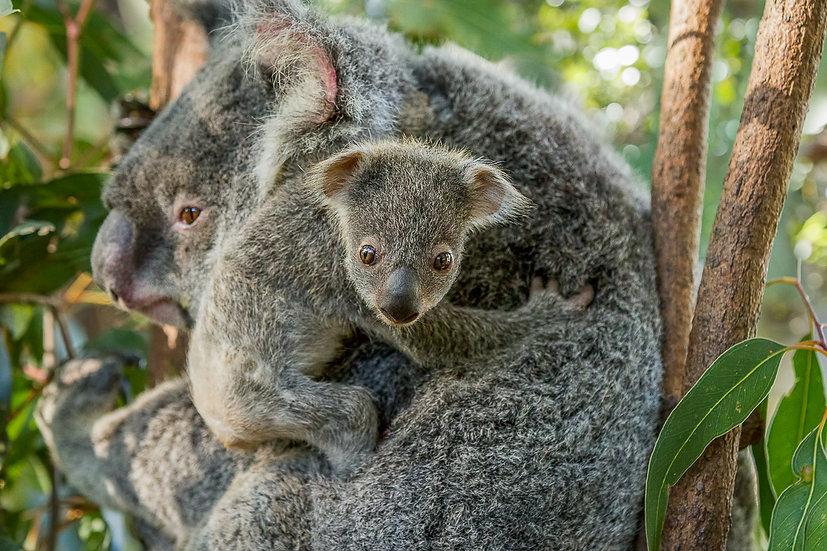 Mum's Hugs