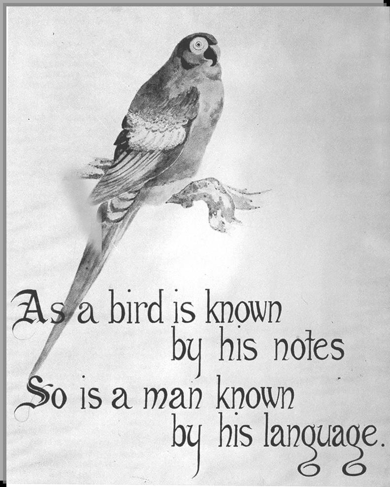 SSSC 'The Bird'