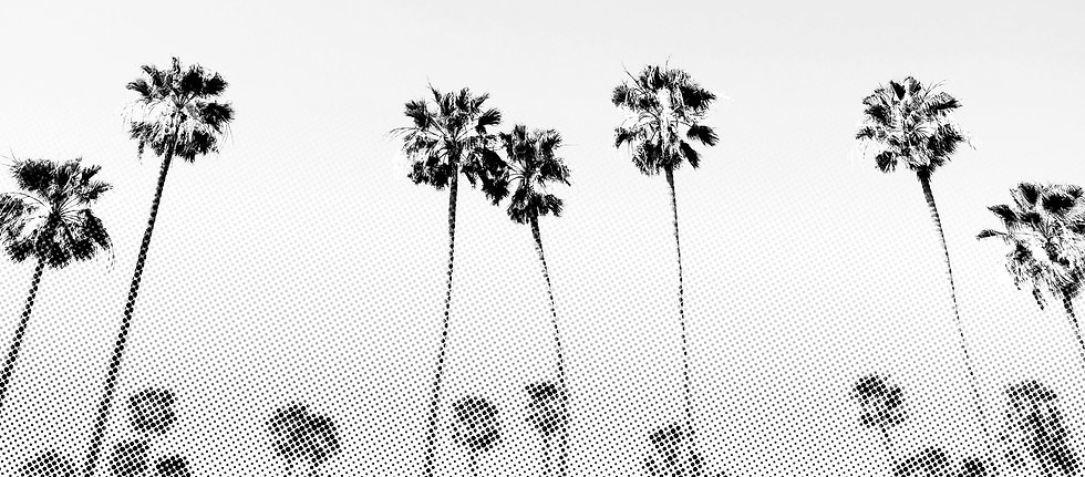 Euro Style About california palm trees