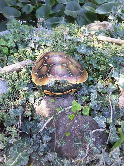 Handpainted rocks, turtle