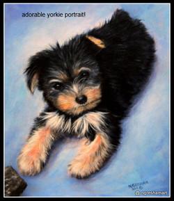 yorkie,pet portrait,painting