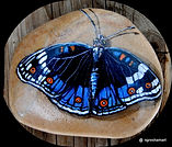 blue butterflies,handpainted rocks,butterflies,yard art,garden art,decor