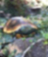 handpainted rocks,turtles,hand painted