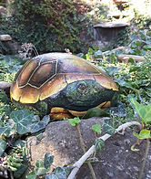 handpainted rocks,turtles,hand painted