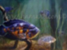 fish paintings,oscar fish paintings,fish and wildlife art,original paintings of fish