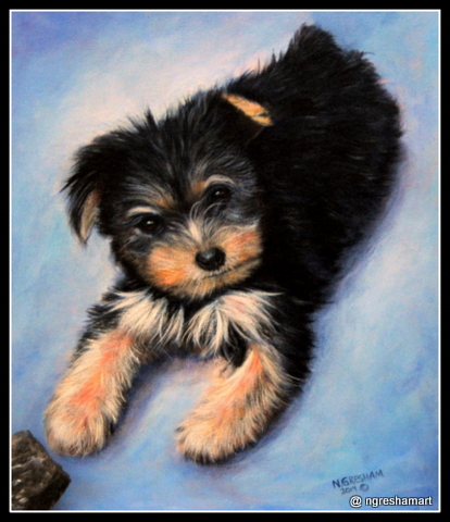 pet portrait dog, acrylic on canvas, yorkie, memorial, commission,puppy