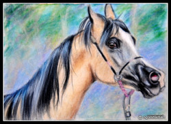 horse colored pencil on suede mat