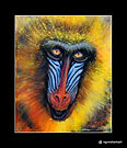 wildlife paintings original art baboon monkey animals