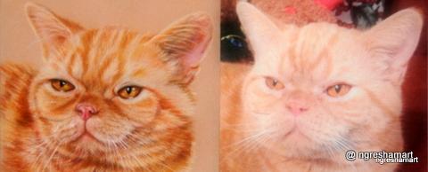 pet portrait (<) photo ref (>) cat