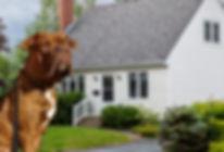 DCI-Properties - London Real Estate Inve