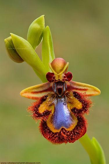 Orquidea-3.jpg
