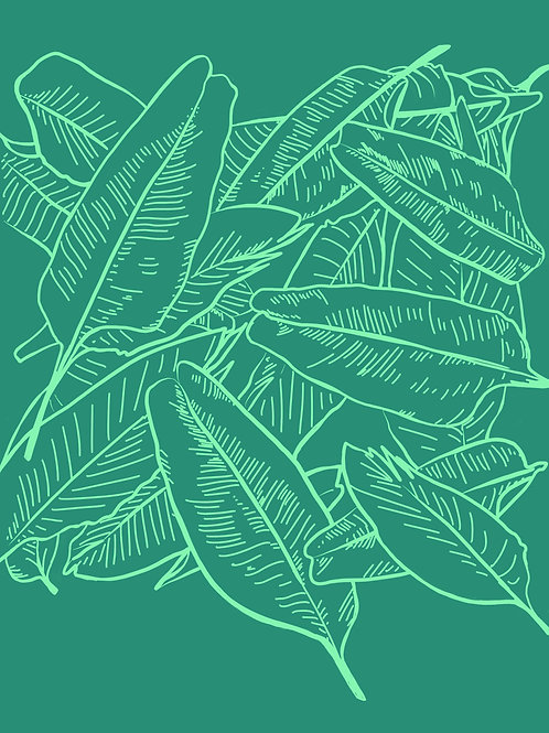 Palm Leaves 5 x 7