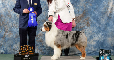Ckc Gr Ch Fortis's He's Too Sexy, akc mj
