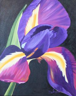 Iris (oil)_16W x 20H_NB