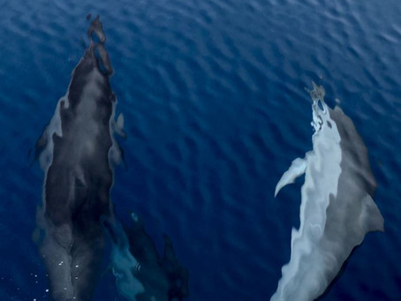 Gift of the dolphins and whales