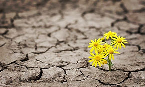 Resilience yellow flowers.jpg