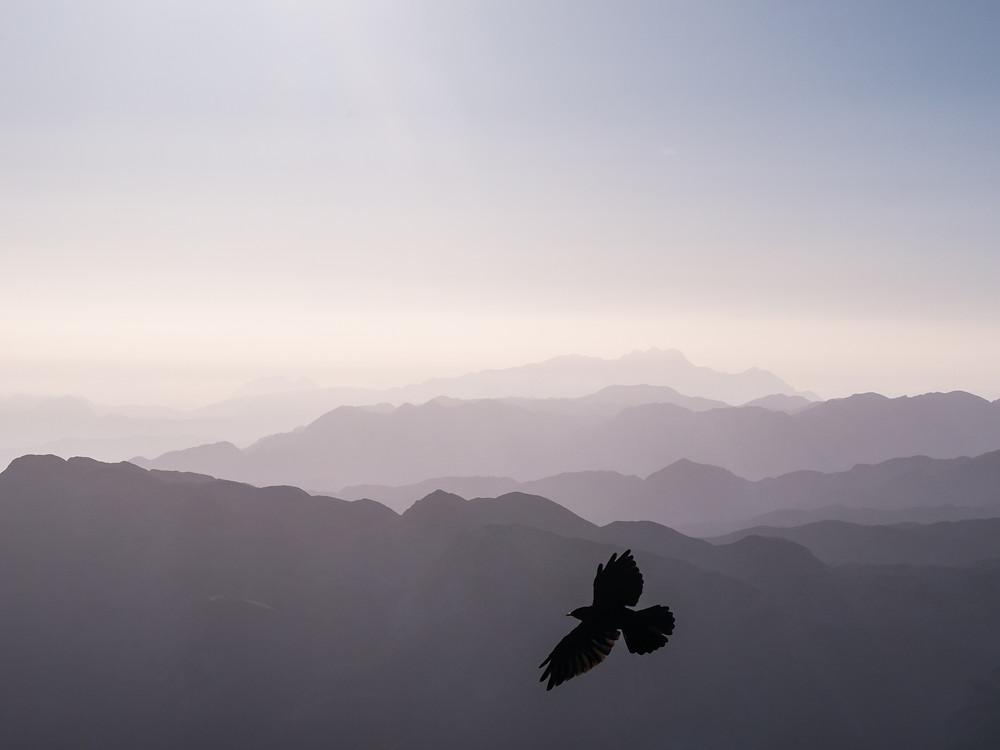 Lone eagle soaring away
