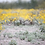 Thumbnail: Yellow Daisy