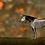 Thumbnail: Skeleton Horse