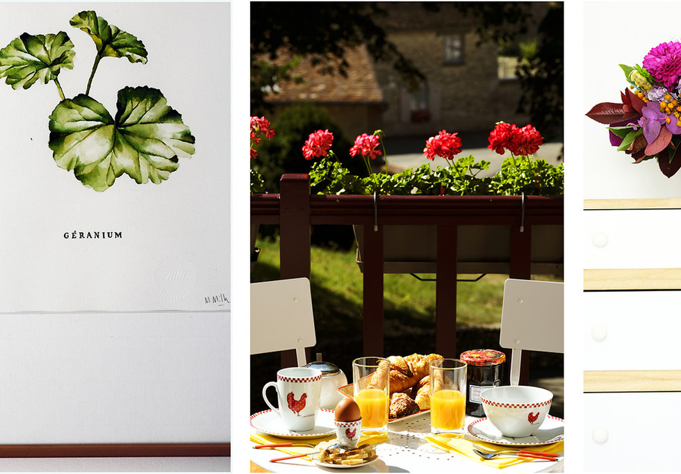 CLOS-FLORA---Maison-Hortensia-Mix.jpg