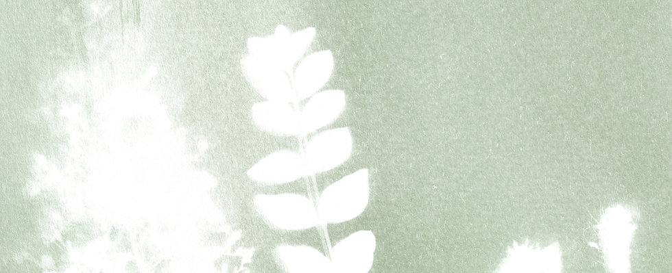 fond_cyanotype_maison.jpg