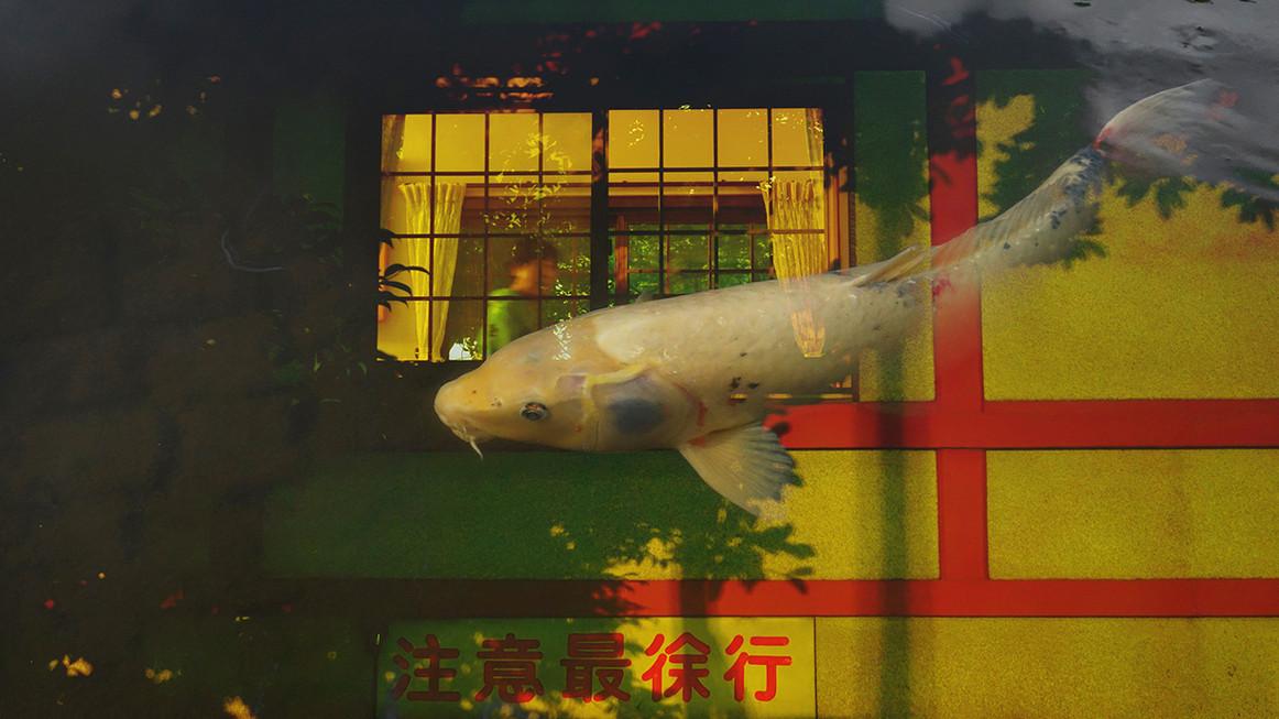 魚 (Sakana)