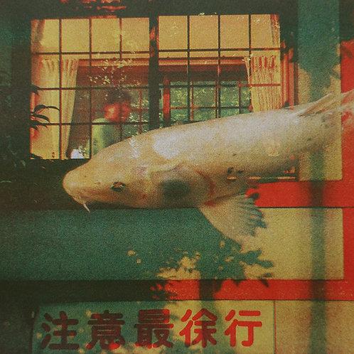 Sakana 魚, de la serie 東京