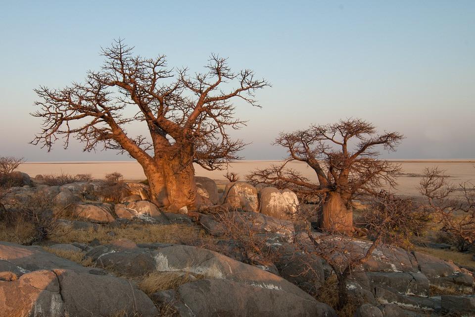 botswana-694485_960_720.jpg