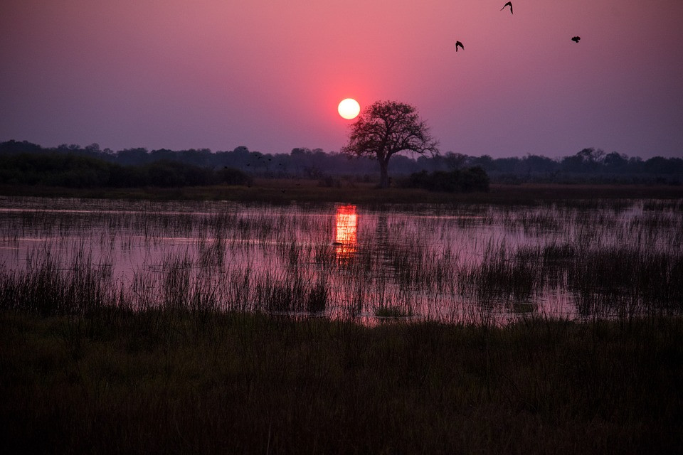 botswana-1022405_960_720.jpg