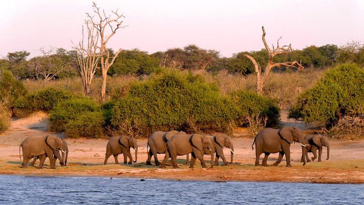 botswana-1653100_960_720.jpg