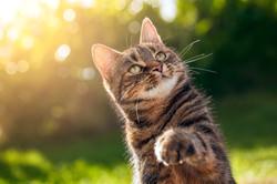 Cat photographer in Wiltshire