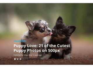 The Cutest Puppies!
