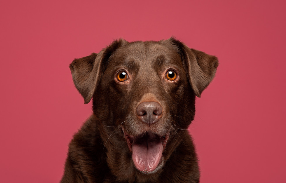 Headshots of Dogs and Cats on Studio Background