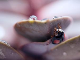 Little Ladybirds