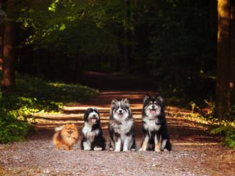Olive, Lily, Peppa & Otso