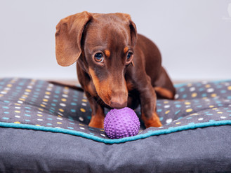 Dog Toy Set - Commercial Shoot