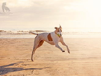Dog Photographer of the year 2014