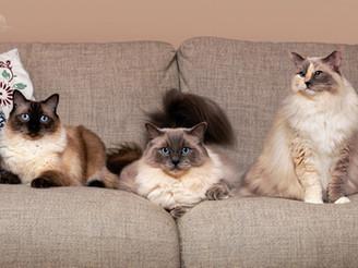 Cookie, Crumpet & Sponge