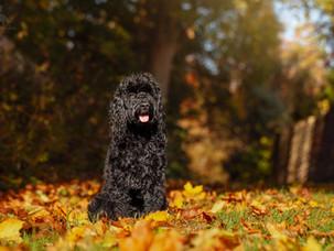 Tilly's Autumn Walk