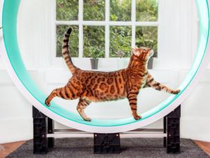 Ferris Cat Wheel - Commercial Photoshoot